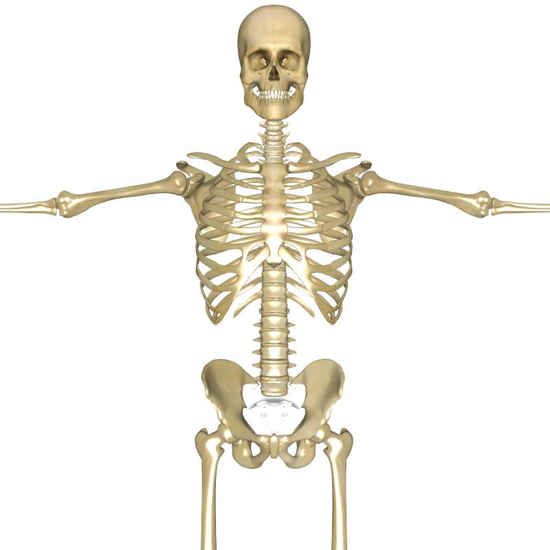 Interactive human anatomy model